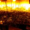 Detinguts dos homes per cultivar marihuana en una casa de Corbera de Llobregat