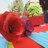 Sant Andreu de la Barca celebra un Sant Jordi ple de roses i llibres