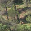 Aprovat el pla de gestió forestal a Castellví de Rosanes